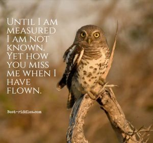 until_i_am_measured_i_am_not_known__yet_how_you_miss_me_when_i_have_flown_