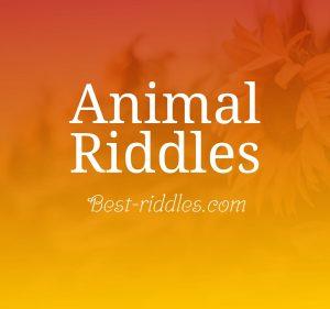 animal_riddles